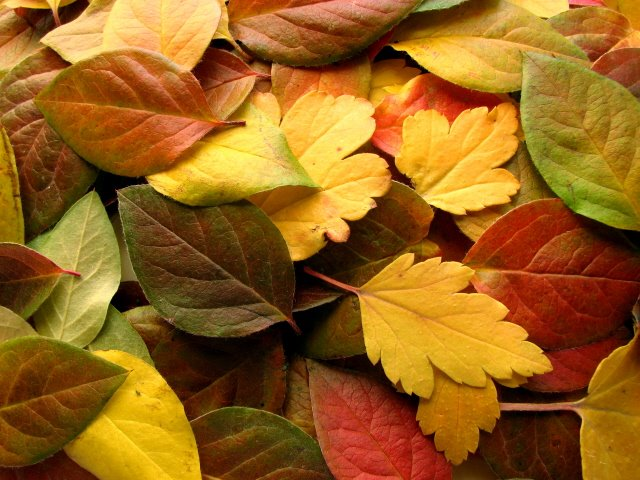 """Of Letting Go & Moving On, """"Autumn of My Life"""" by Bobby Goldsboro"""